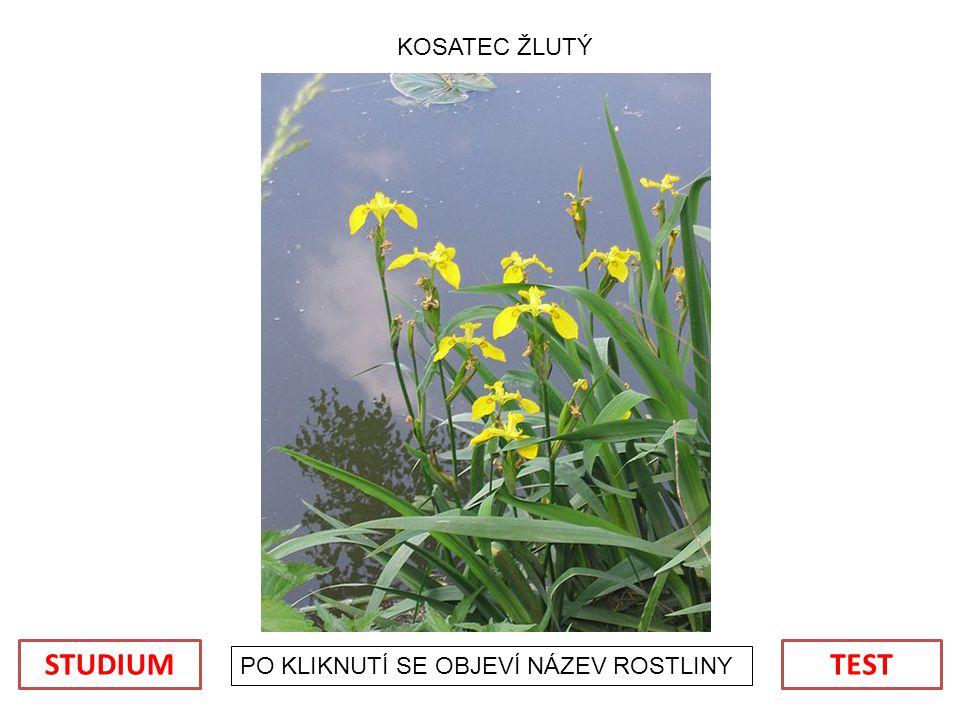 POUŽITÉ OBRÁZKY: oubor:Muscari neglectum (flowers).jpg.