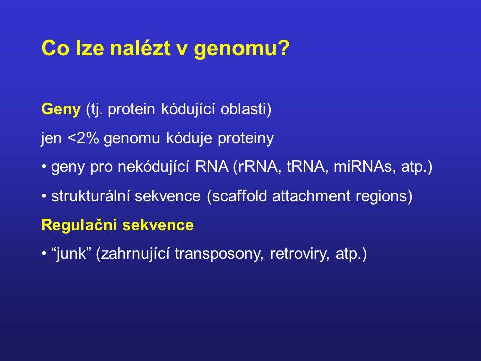 Co lze nalézt v genomu.Geny (tj.