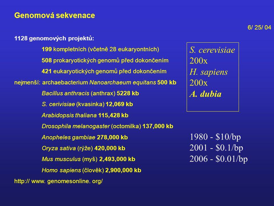 Genomová sekvenace 6/ 25/ 04 1128 genomových projektů: 199 kompletních (včetně 28 eukaryontních) 508 prokaryotických genomů před dokončením 421 eukaryotických genomů před dokončením nejmenší: archaebacterium Nanoarchaeum equitans 500 kb Bacillus anthracis (anthrax) 5228 kb S.