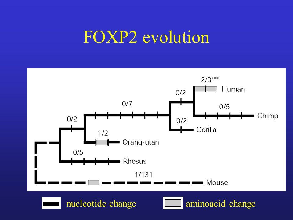 FOXP2 evolution nucleotide changeaminoacid change