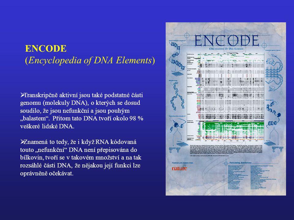 """ENCODE (Encyclopedia of DNA Elements)  Transkripčně aktivní jsou také podstatné části genomu (molekuly DNA), o kterých se dosud soudilo, že jsou nefunkční a jsou pouhým """"balastem ."""