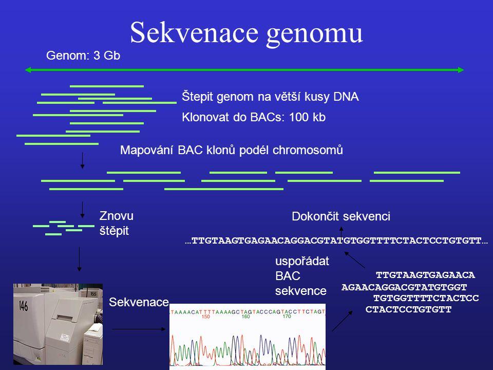 Sekvenace genomu Genom: 3 Gb Štepit genom na větší kusy DNA Klonovat do BACs: 100 kb Mapování BAC klonů podél chromosomů Znovu štěpit Sekvenace AGAACAGGACGTATGTGGT TGTGGTTTTCTACTCC CTACTCCTGTGTT TTGTAAGTGAGAACA uspořádat BAC sekvence …TTGTAAGTGAGAACAGGACGTATGTGGTTTTCTACTCCTGTGTT… Dokončit sekvenci