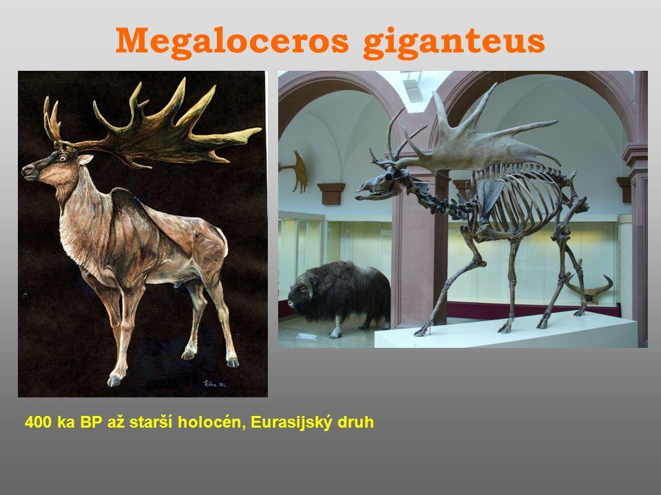 Megaloceros giganteus 400 ka BP až starší holocén, Eurasijský druh