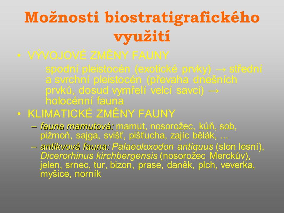 Možnosti biostratigrafického využití VÝVOJOVÉ ZMĚNY FAUNY spodní pleistocén (exotické prvky) → střední a svrchní pleistocén (převaha dnešních prvků, dosud vymřelí velcí savci) → holocénní fauna KLIMATICKÉ ZMĚNY FAUNY –fauna mamutová: –fauna mamutová: mamut, nosorožec, kůň, sob, pižmoň, sajga, svišť, pišťucha, zajíc bělák,...
