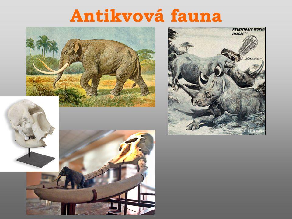 Antikvová fauna