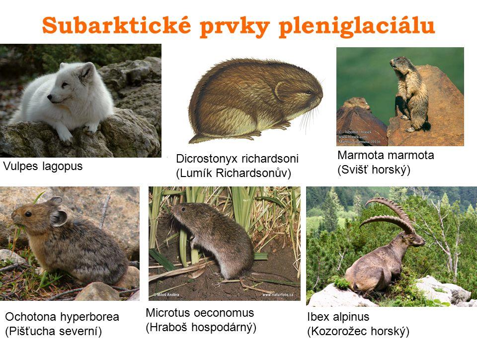 Subarktické prvky pleniglaciálu Dicrostonyx richardsoni (Lumík Richardsonův) Ochotona hyperborea (Pišťucha severní) Marmota marmota (Svišť horský) Vul