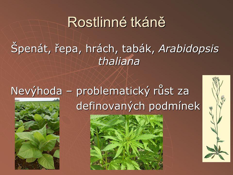 Rostlinné tkáně Špenát, řepa, hrách, tabák, Arabidopsis thaliana Nevýhoda – problematický růst za definovaných podmínek definovaných podmínek