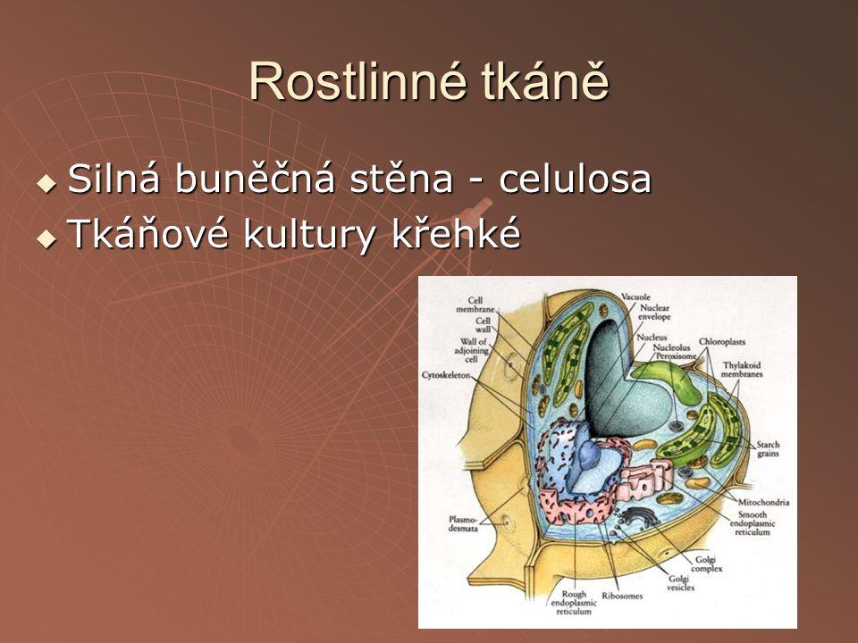 Rostlinné tkáně  Silná buněčná stěna - celulosa  Tkáňové kultury křehké