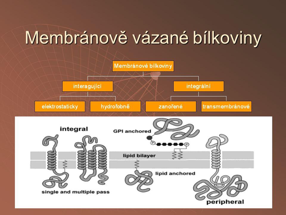 Membránově vázané bílkoviny