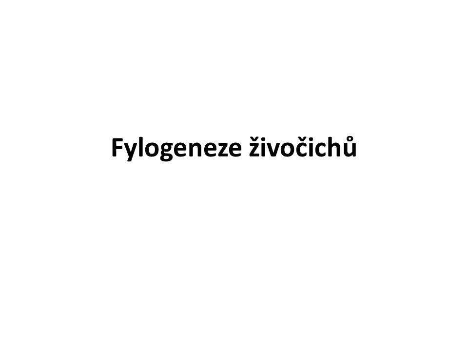 Fylogeneze živočichů