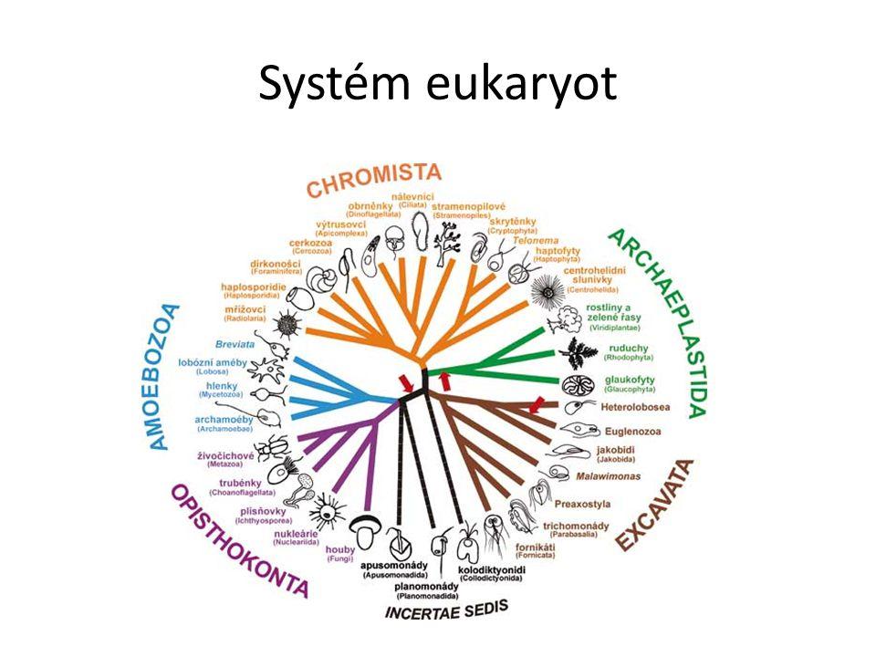 Systém eukaryot