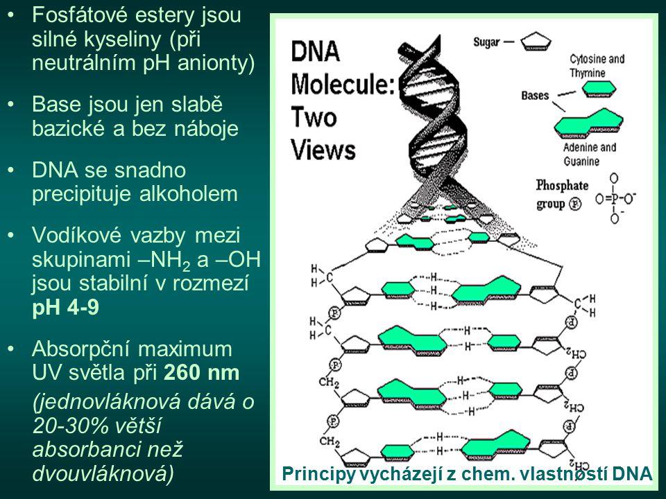 Fosfátové estery jsou silné kyseliny (při neutrálním pH anionty) Base jsou jen slabě bazické a bez náboje DNA se snadno precipituje alkoholem Vodíkové