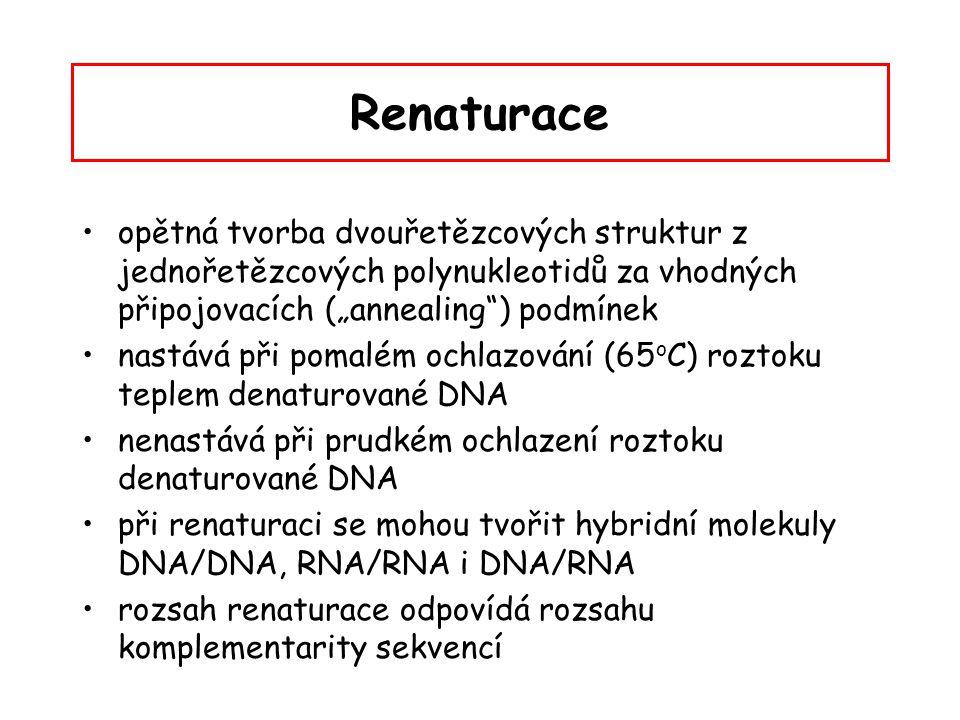 """Renaturace opětná tvorba dvouřetězcových struktur z jednořetězcových polynukleotidů za vhodných připojovacích (""""annealing"""") podmínek nastává při pomal"""