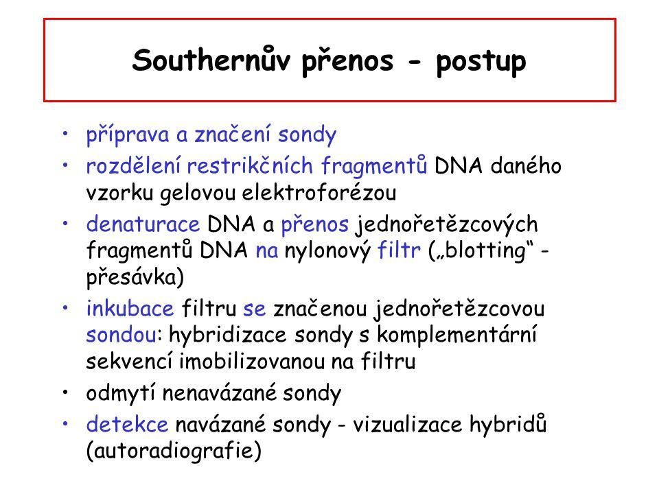 Southernův přenos - postup příprava a značení sondy rozdělení restrikčních fragmentů DNA daného vzorku gelovou elektroforézou denaturace DNA a přenos