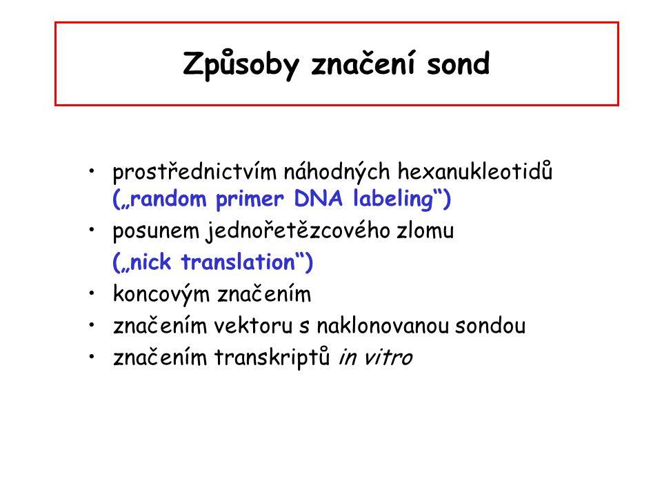 """Způsoby značení sond prostřednictvím náhodných hexanukleotidů (""""random primer DNA labeling"""") posunem jednořetězcového zlomu (""""nick translation"""") konco"""