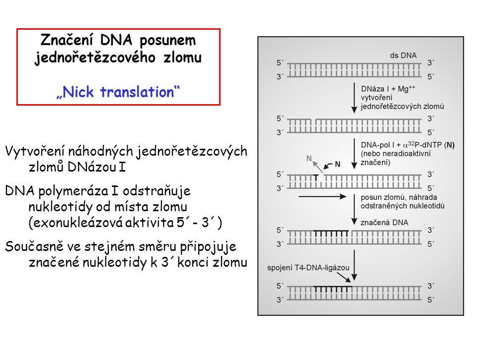 """Značení DNA posunem jednořetězcového zlomu """"Nick translation"""" Vytvoření náhodných jednořetězcových zlomů DNázou I DNA polymeráza I odstraňuje nukleoti"""