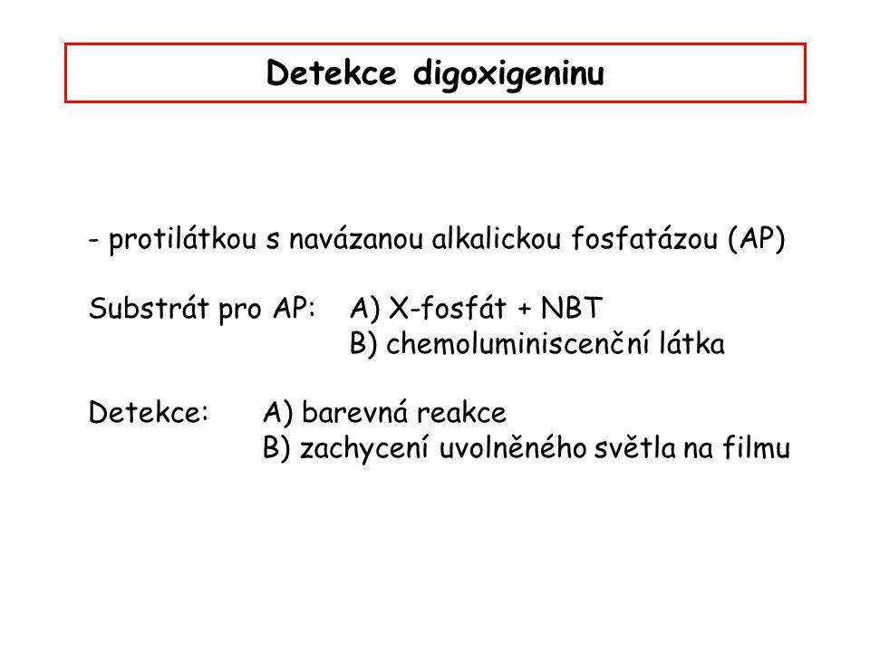 Detekce digoxigeninu - protilátkou s navázanou alkalickou fosfatázou (AP) Substrát pro AP: A) X-fosfát + NBT B) chemoluminiscenční látka Detekce:A) ba