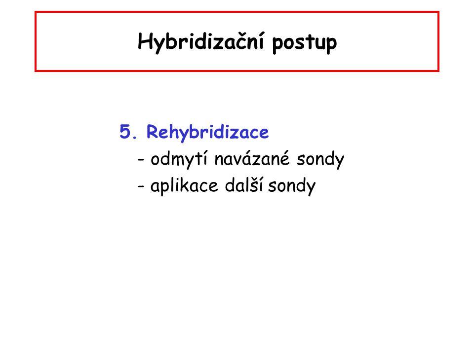 Hybridizační postup 5. Rehybridizace - odmytí navázané sondy - aplikace další sondy