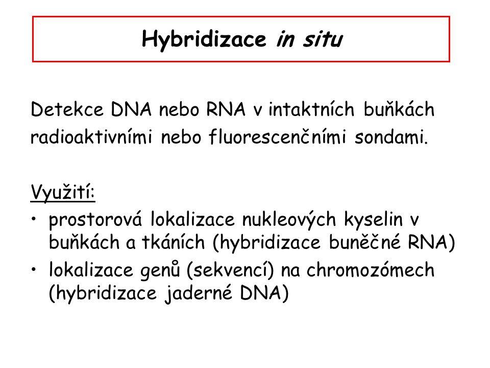 Hybridizace in situ Detekce DNA nebo RNA v intaktních buňkách radioaktivními nebo fluorescenčními sondami. Využití: prostorová lokalizace nukleových k