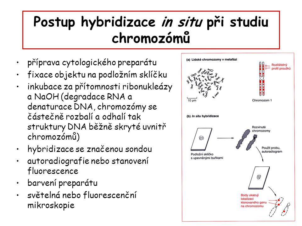 Postup hybridizace in situ při studiu chromozómů příprava cytologického preparátu fixace objektu na podložním sklíčku inkubace za přítomnosti ribonukl