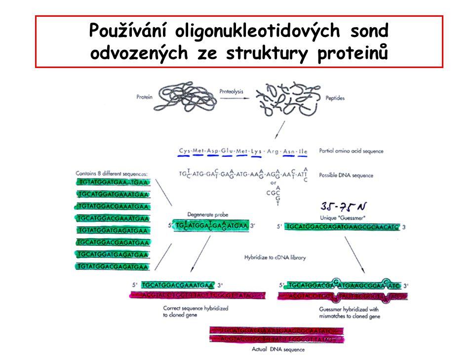 Používání oligonukleotidových sond odvozených ze struktury proteinů