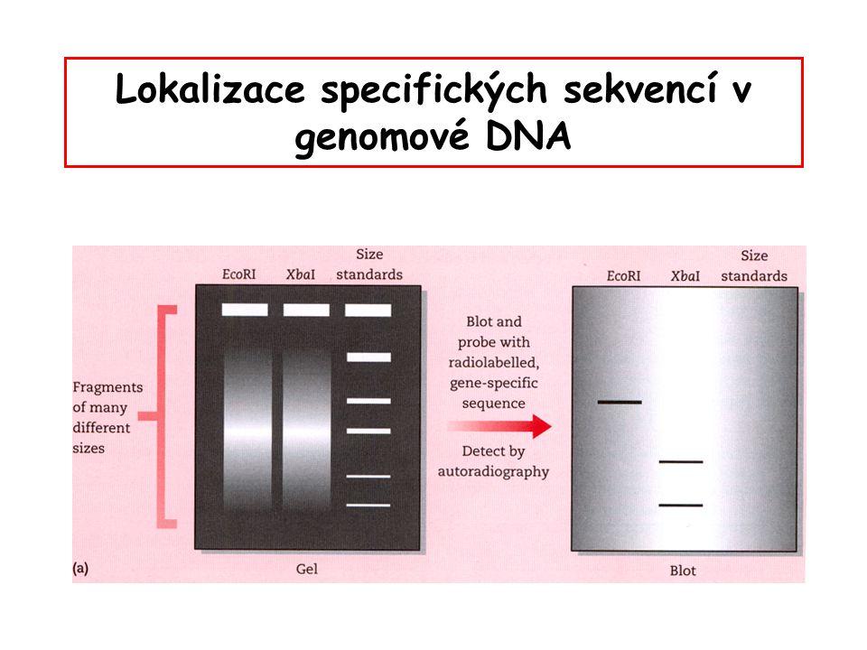 Lokalizace specifických sekvencí v genomové DNA