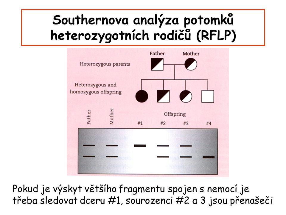 Southernova analýza potomků heterozygotních rodičů (RFLP) Pokud je výskyt většího fragmentu spojen s nemocí je třeba sledovat dceru #1, sourozenci #2