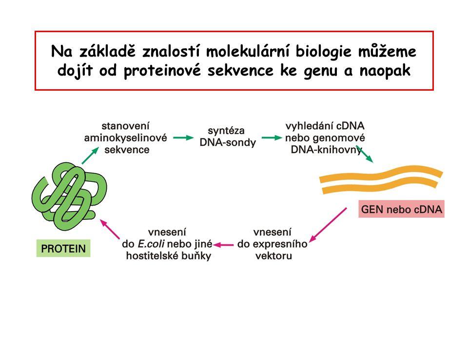 Na základě znalostí molekulární biologie můžeme dojít od proteinové sekvence ke genu a naopak