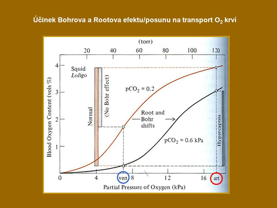 Účinek Bohrova a Rootova efektu/posunu na transport O 2 krví