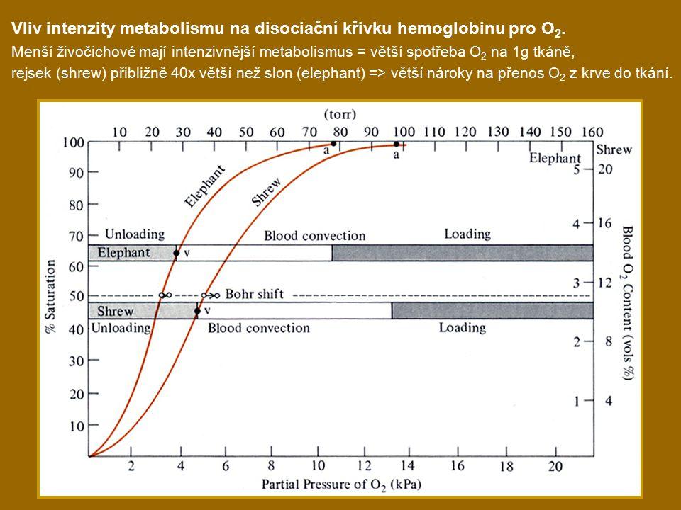 Vliv intenzity metabolismu na disociační křivku hemoglobinu pro O 2.