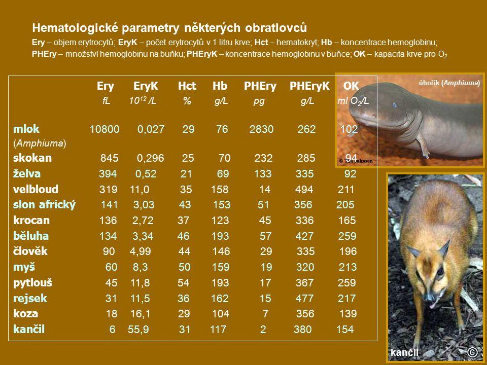 Hematologické parametry některých obratlovců Ery – objem erytrocytů; EryK – počet erytrocytů v 1 litru krve; Hct – hematokryt; Hb – koncentrace hemoglobinu; PHEry – množství hemoglobinu na buňku; PHEryK – koncentrace hemoglobinu v buňce; OK – kapacita krve pro O 2 Ery EryK Hct Hb PHEry PHEryK OK fL 10 12 /L % g/L pg g/L ml O 2 /L mlok 10800 0,027 29 76 2830 262 102 (Amphiuma) skokan 845 0,296 25 70 232 285 94 želva 394 0,52 21 69 133 335 92 velbloud 319 11,0 35 158 14 494 211 slon africký 141 3,03 43 153 51 356 205 krocan 136 2,72 37 123 45 336 165 běluha 134 3,34 46 193 57 427 259 člověk 90 4,99 44 146 29 335 196 myš 60 8,3 50 159 19 320 213 pytlouš 45 11,8 54 193 17 367 259 rejsek 31 11,5 36 162 15 477 217 koza 18 16,1 29 104 7 356 139 kančil 6 55,9 31 117 2 380 154 úhořík (Amphiuma) kančil