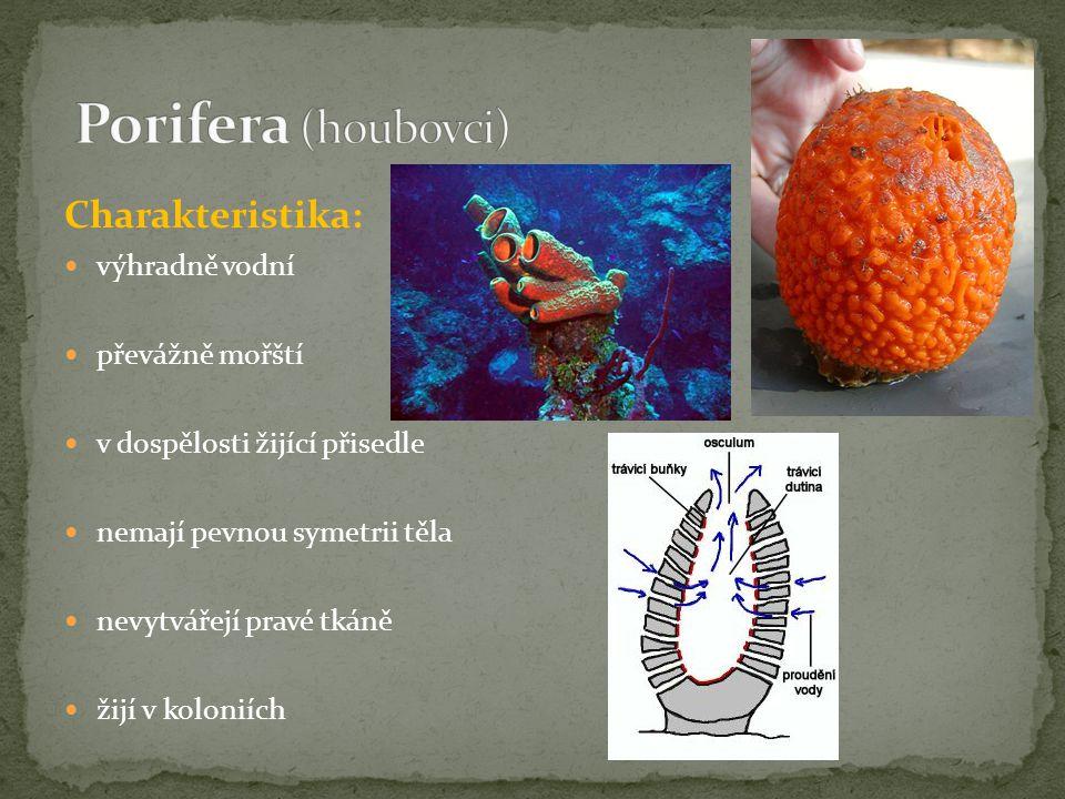 Charakteristika: výhradně vodní převážně mořští v dospělosti žijící přisedle nemají pevnou symetrii těla nevytvářejí pravé tkáně žijí v koloniích