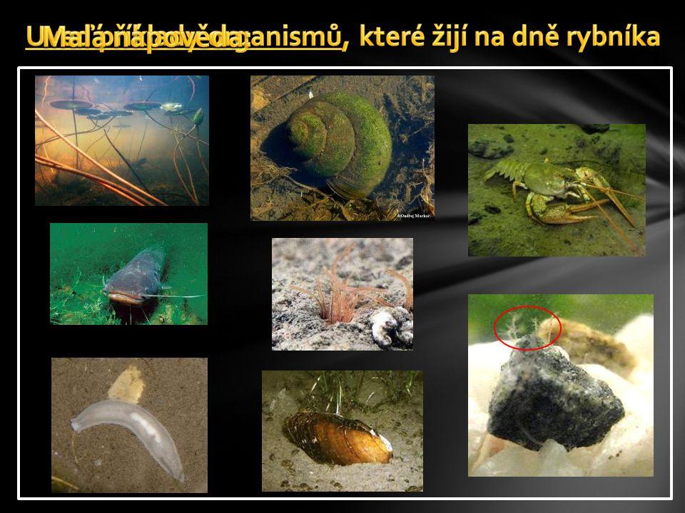  V posledních letech dochází v České republice k neúměrnému přemnožení sinic, které jsou nebezpečné nejen pro vodní živočichy a rostliny, ale také pro zdraví obyvatel.