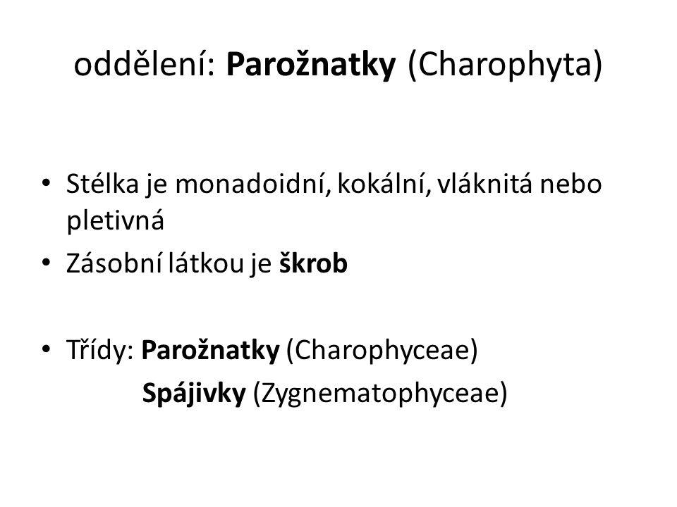 oddělení: Parožnatky (Charophyta) Stélka je monadoidní, kokální, vláknitá nebo pletivná Zásobní látkou je škrob Třídy: Parožnatky (Charophyceae) Spájivky (Zygnematophyceae)