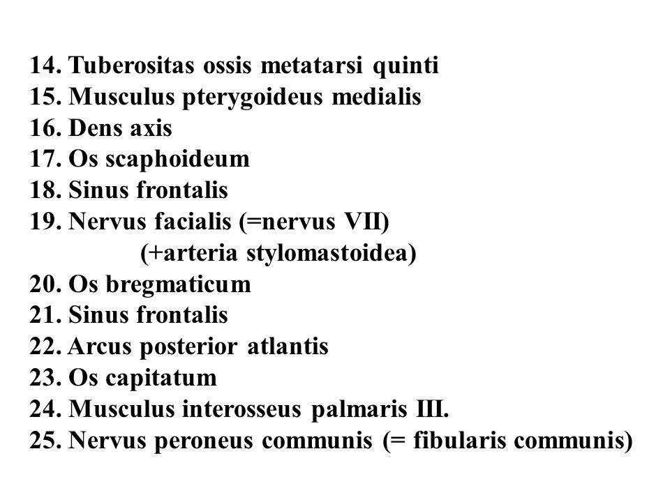 14. Tuberositas ossis metatarsi quinti 15. Musculus pterygoideus medialis 16. Dens axis 17. Os scaphoideum 18. Sinus frontalis 19. Nervus facialis (=n