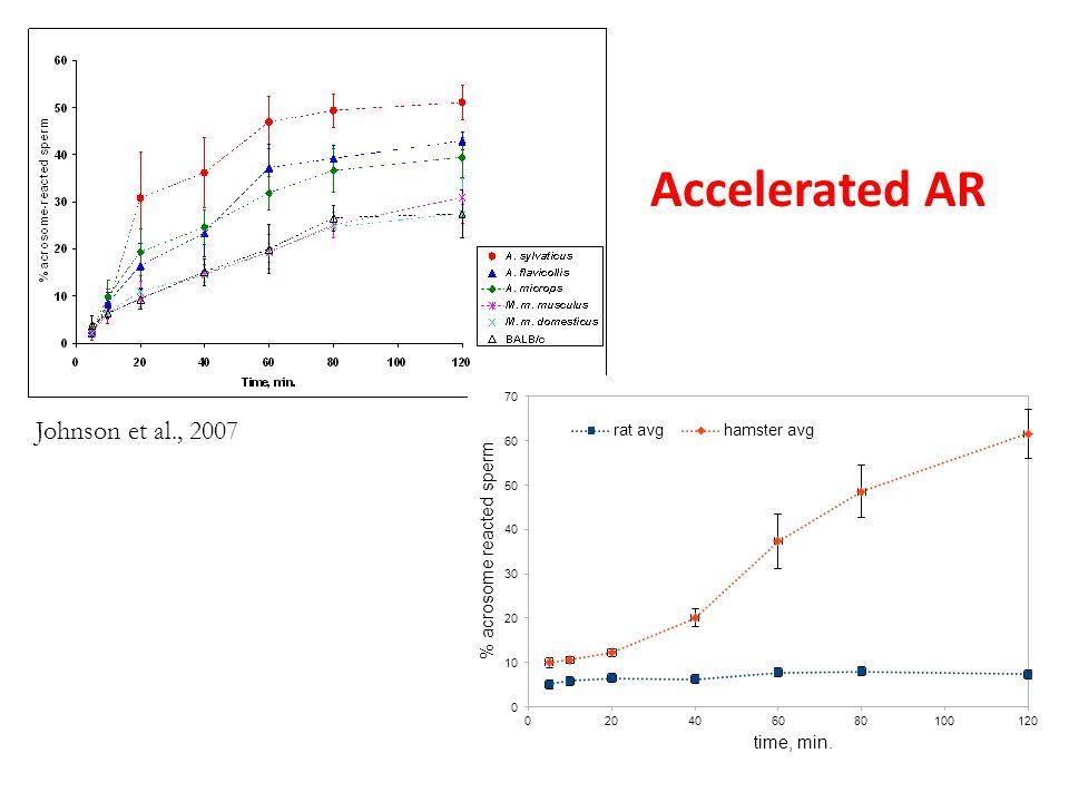 Accelerated AR Johnson et al., 2007