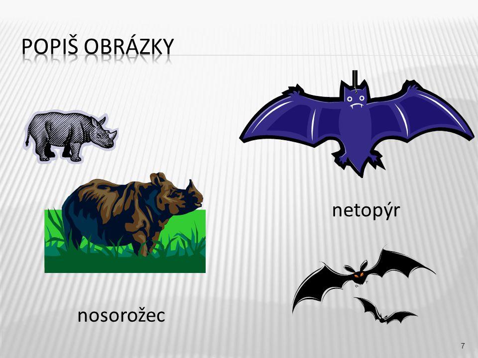 netopýr 7 nosorožec