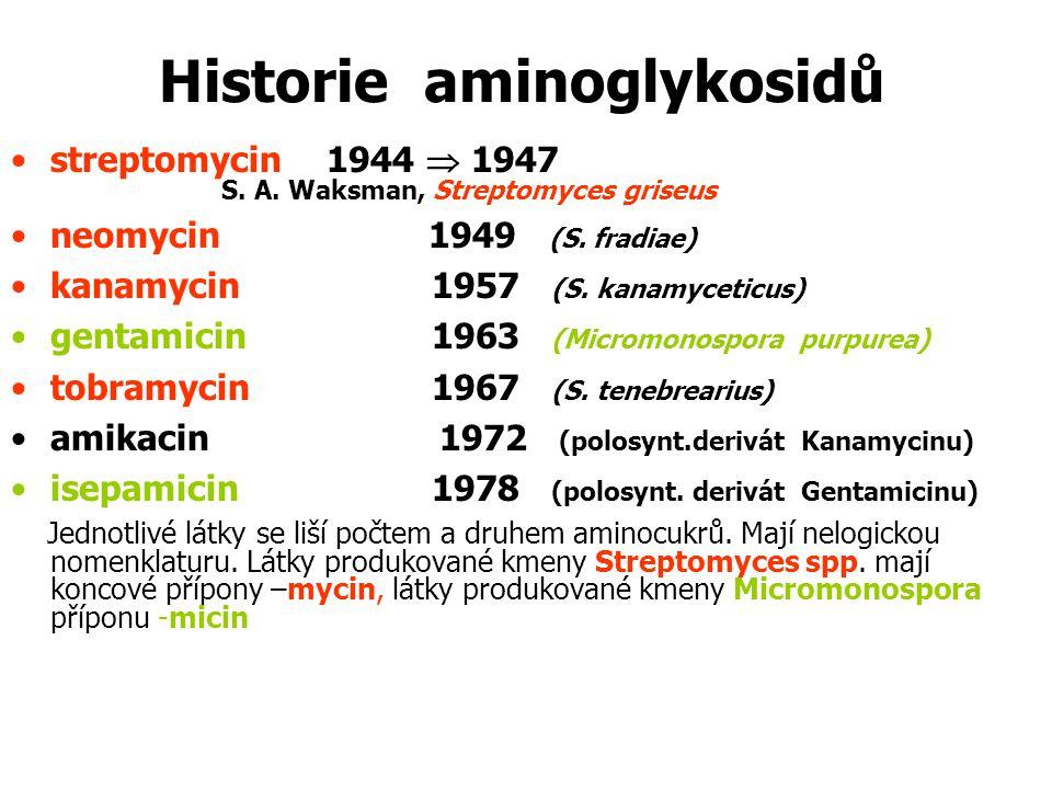 Historie aminoglykosidů streptomycin1944  1947 S. A. Waksman, Streptomyces griseus neomycin 1949 (S. fradiae) kanamycin1957 (S. kanamyceticus) gentam