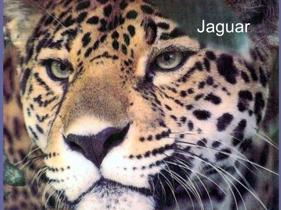 26.4.2015Zdeněk Bergman, G Teplice Jaguar
