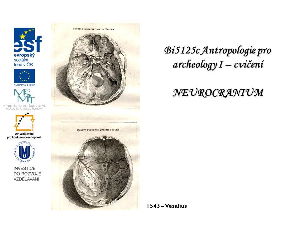 1543 – Vesalius Bi5125c Antropologie pro archeology I – cvičení NEUROCRANIUM