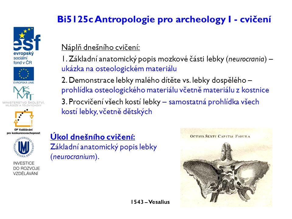 Bi5125c Antropologie pro archeology I - cvičení Náplň dnešního cvičení: 1. Základní anatomický popis mozkové části lebky (neurocrania) – ukázka na ost