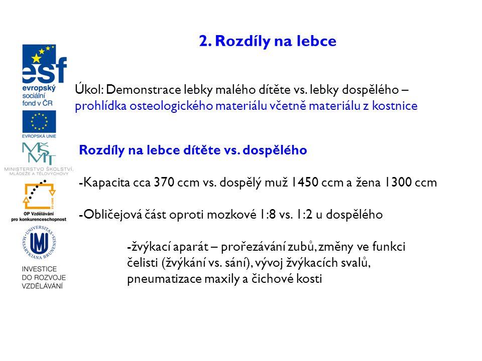 2. Rozdíly na lebce Rozdíly na lebce dítěte vs. dospělého -Kapacita cca 370 ccm vs. dospělý muž 1450 ccm a žena 1300 ccm -Obličejová část oproti mozko