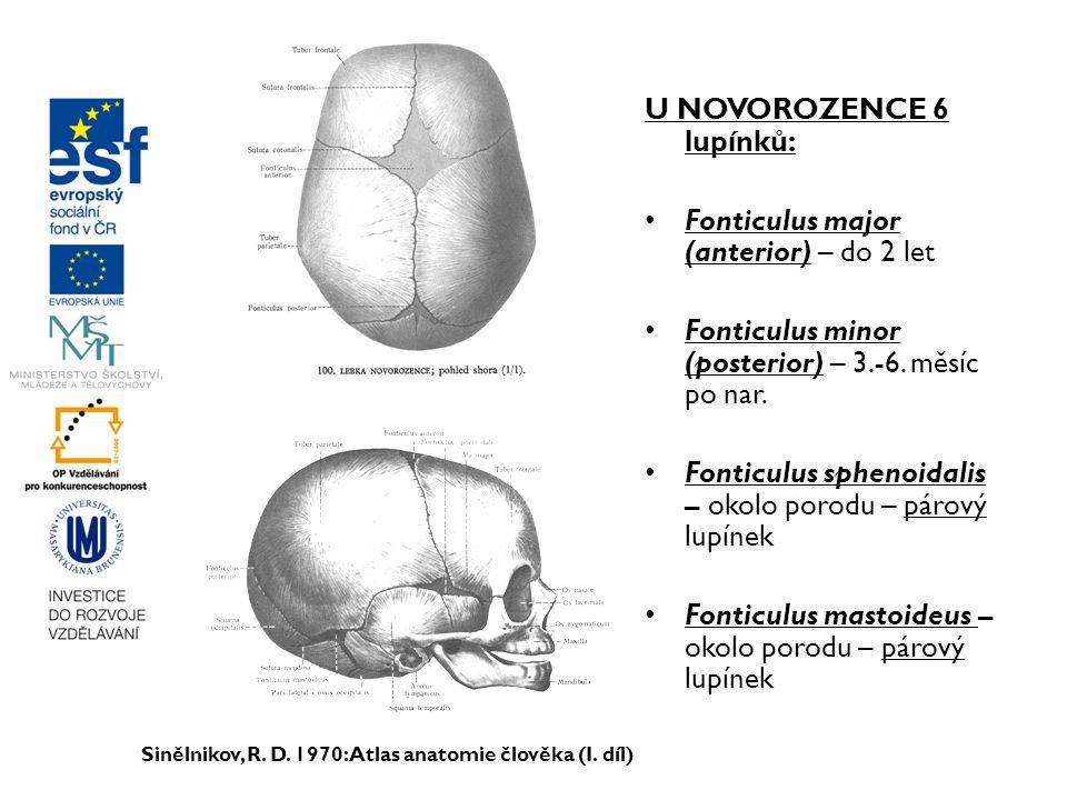 U NOVOROZENCE 6 lupínků: Fonticulus major (anterior) – do 2 let Fonticulus minor (posterior) – 3.-6. měsíc po nar. Fonticulus sphenoidalis – okolo por