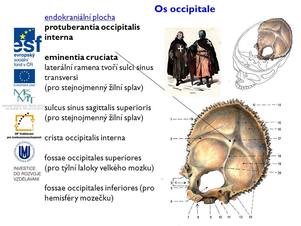 Os occipitale endokraniální plocha protuberantia occipitalis interna eminentia cruciata laterální ramena tvoří sulci sinus transversi (pro stejnojmenn