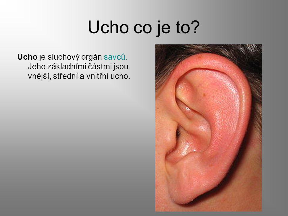 Ucho co je to? Ucho je sluchový orgán savců. Jeho základními částmi jsou vnější, střední a vnitřní ucho.