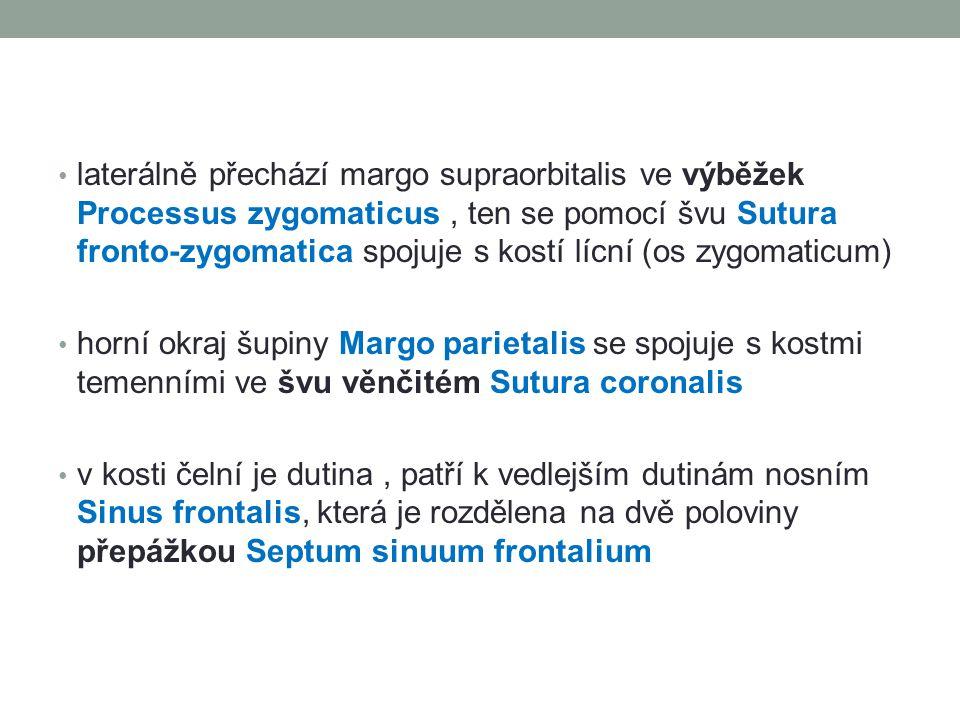 laterálně přechází margo supraorbitalis ve výběžek Processus zygomaticus, ten se pomocí švu Sutura fronto-zygomatica spojuje s kostí lícní (os zygomaticum) horní okraj šupiny Margo parietalis se spojuje s kostmi temenními ve švu věnčitém Sutura coronalis v kosti čelní je dutina, patří k vedlejším dutinám nosním Sinus frontalis, která je rozdělena na dvě poloviny přepážkou Septum sinuum frontalium