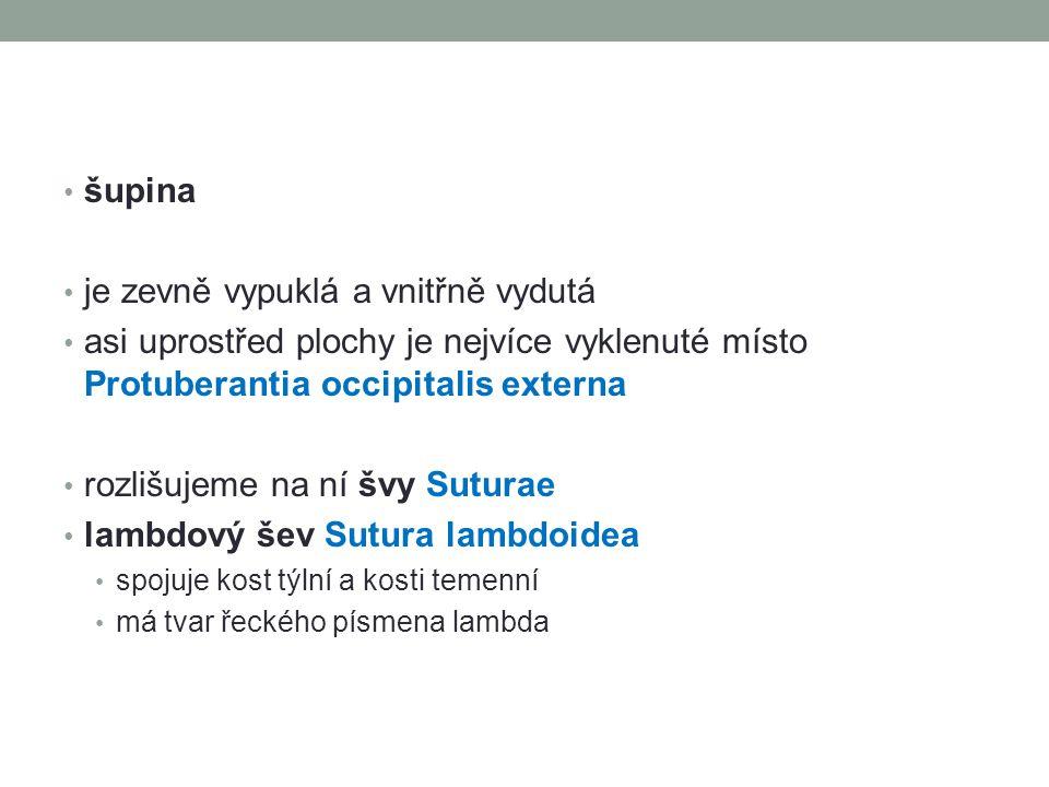 týlně-spánkový šev Sutura occipitomastoidea spojuje kost týlní a spánkovou