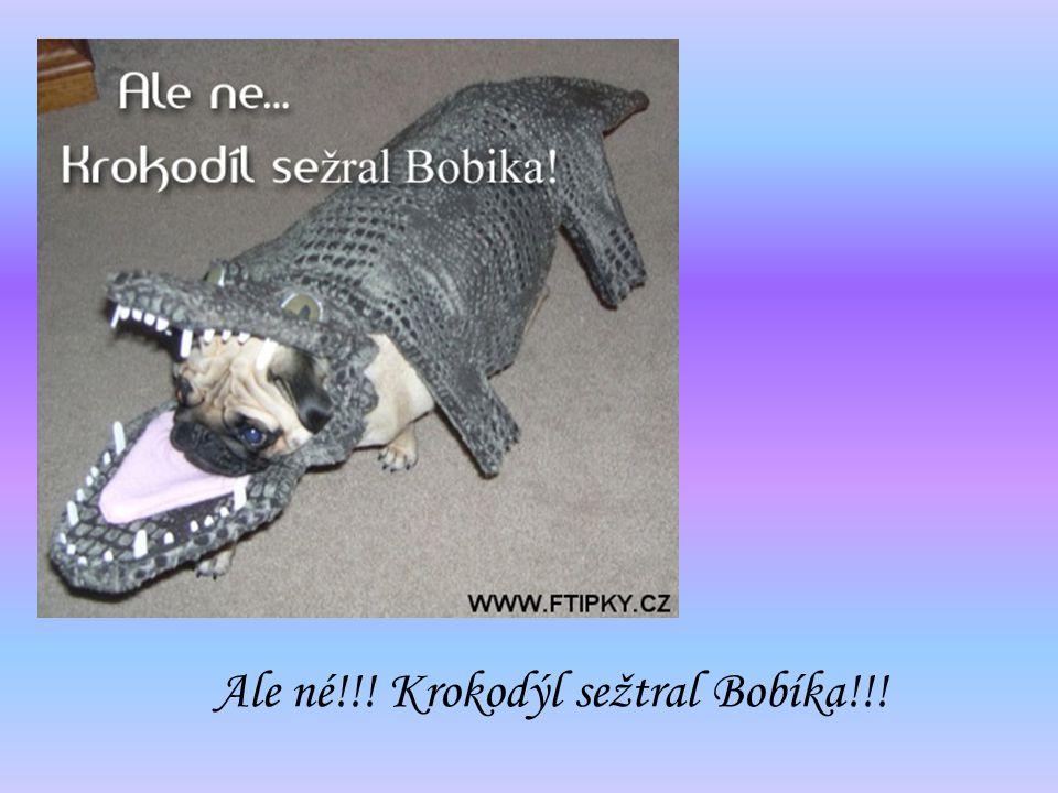 Ale né!!! Krokodýl sežtral Bobíka!!!