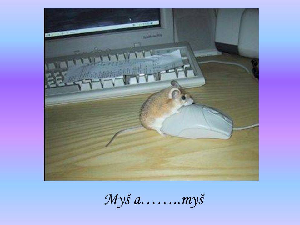 Myš a……..myš