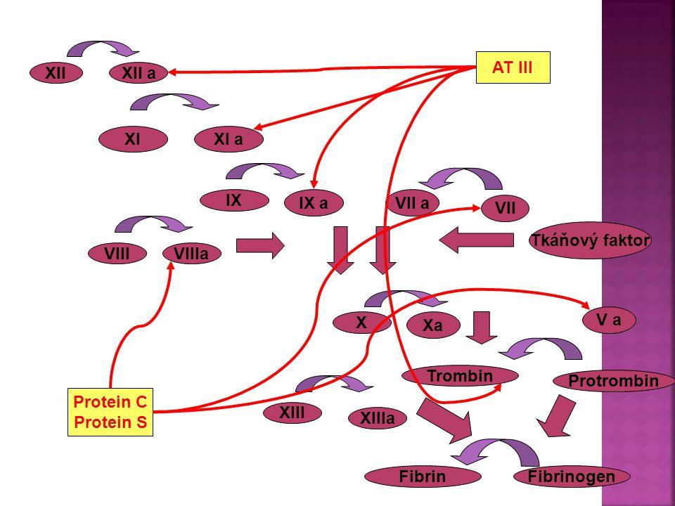 XIIXII a XIXI a IX IX a VII VII a X Xa Trombin Protrombin Fibrinogen Fibrin XIII XIIIa VIIIVIIIa Tkáňový faktor AT III Protein C Protein S V a GRAVIDITA